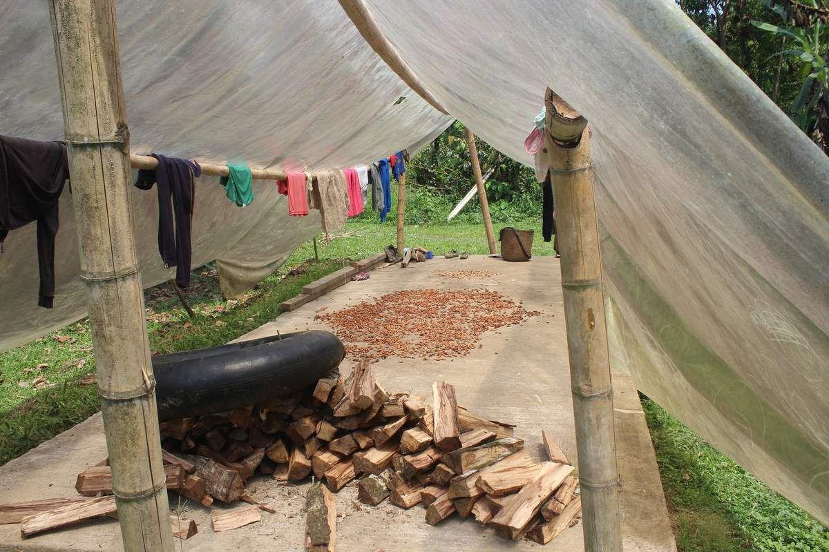 Des fèves de cacao séchant.
