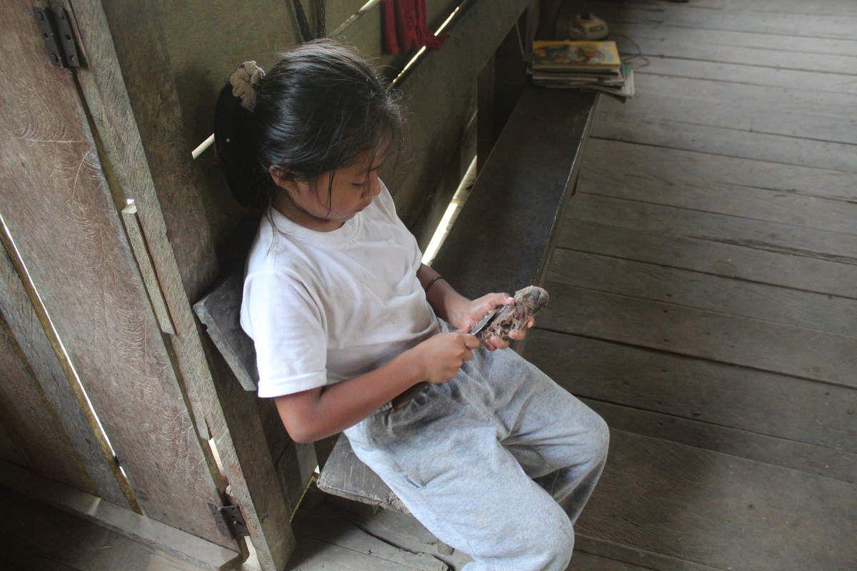 Culturellement, chez les kichwas, ce sont les petites filles qui mangent la tête des animaux, ici une tête de gros rongeur amazonien dont on a oublié le nom.