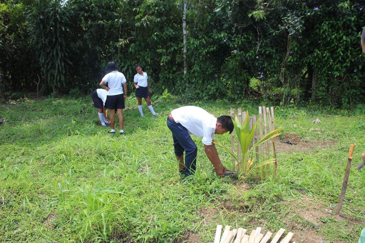 Les élèves apprennent à cultiver arbres fruitiers et plantes médicinales.