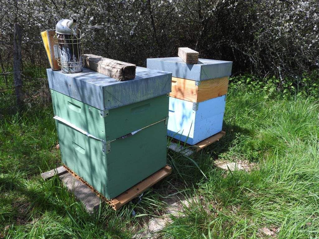 ruches avec la hausse séparée par une feuille de papier journal