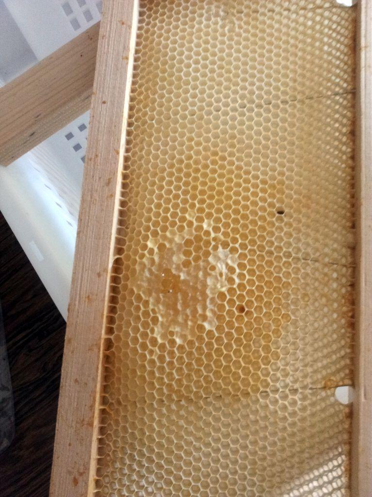 Récolte du miel