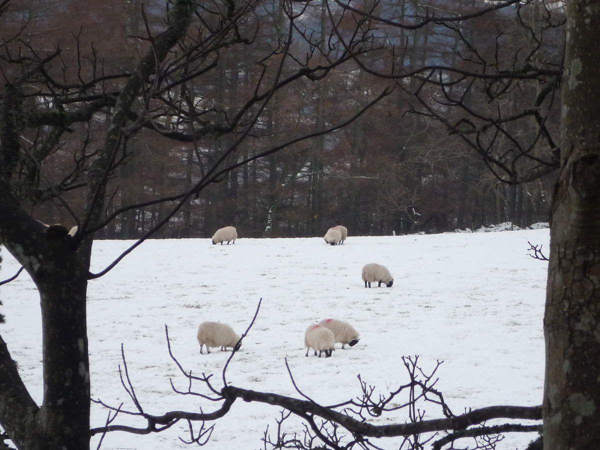Le mouton arc en ciel arrive!