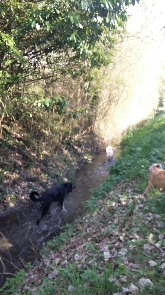 9ème Rando Canine : Chitenay le 26/03/2017