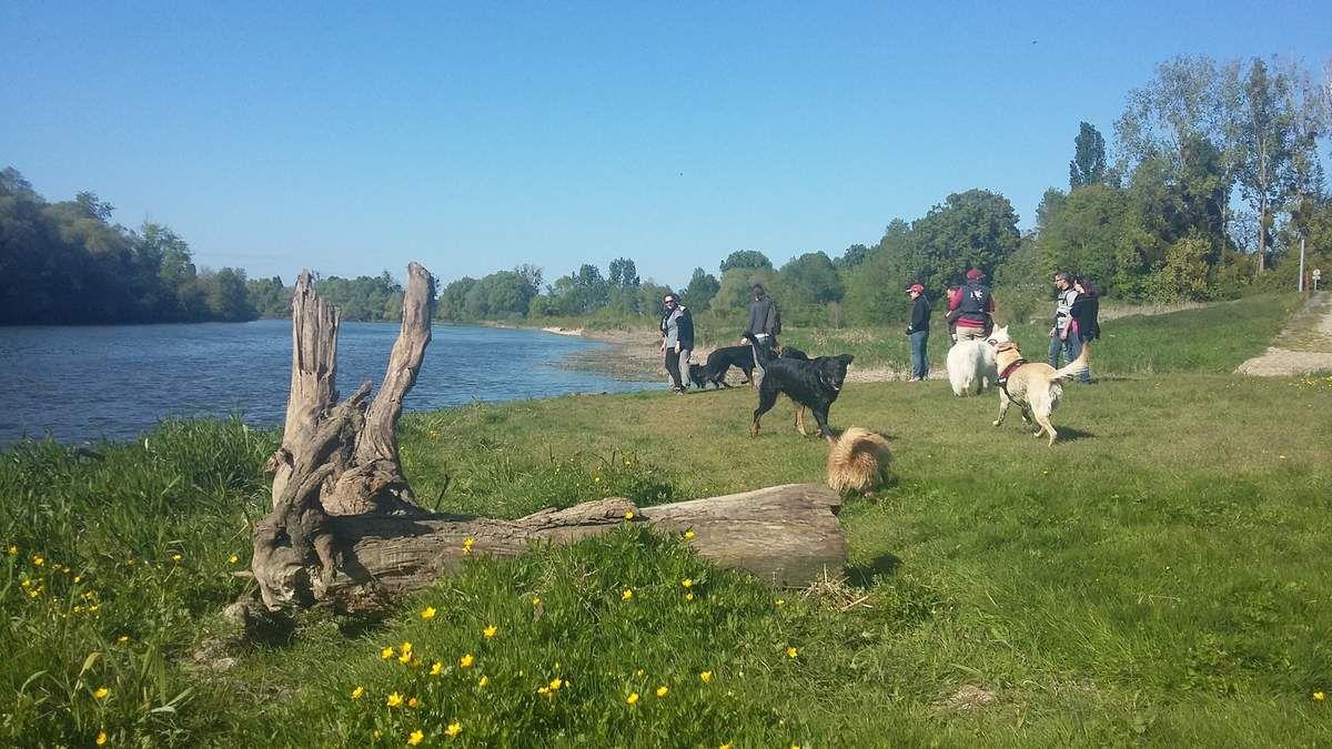10ème Rando Canine :  Nouan sur Loire le 23/04/2017