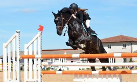 Things To Look Out For When Buying Show Jumping Horses