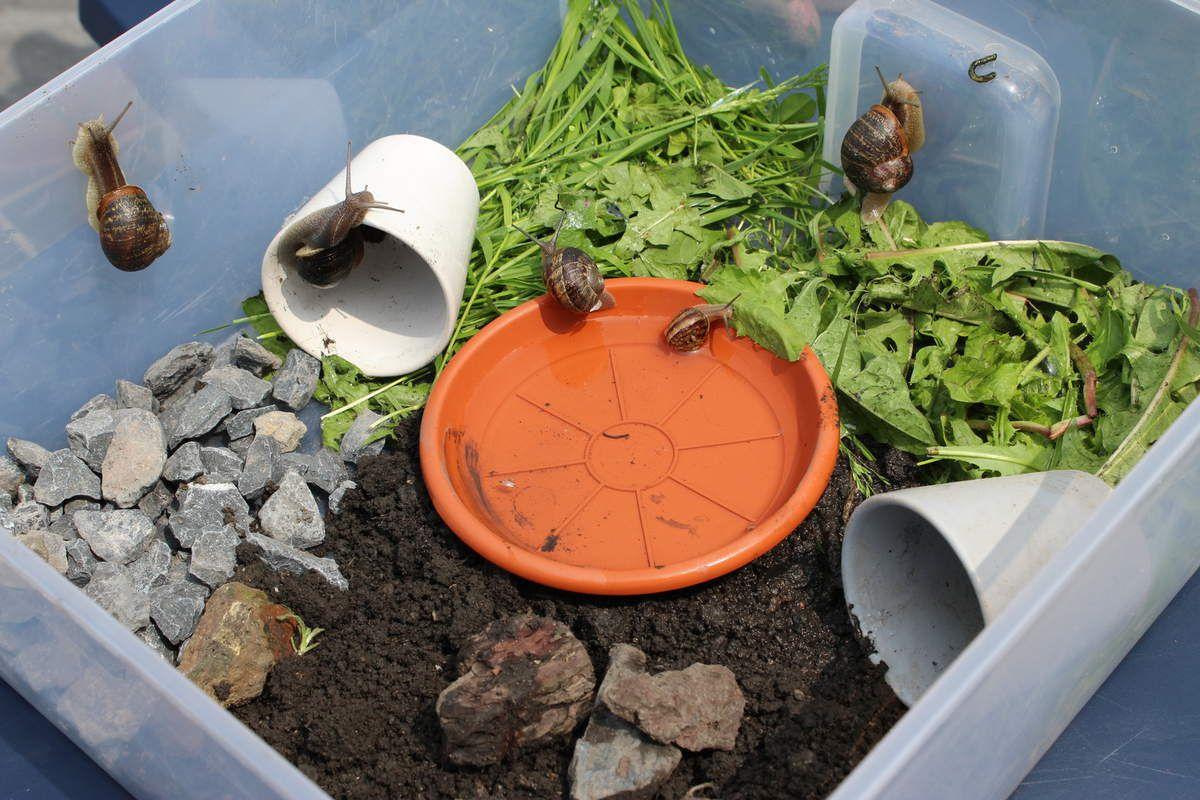 Chasse aux escargots, découvertes et observations