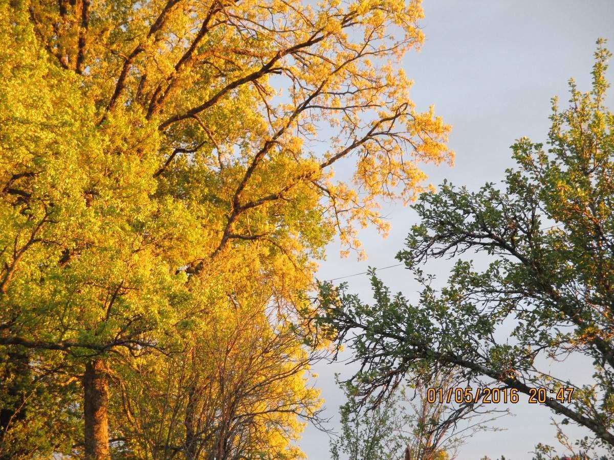 Le soleil sur les arbres