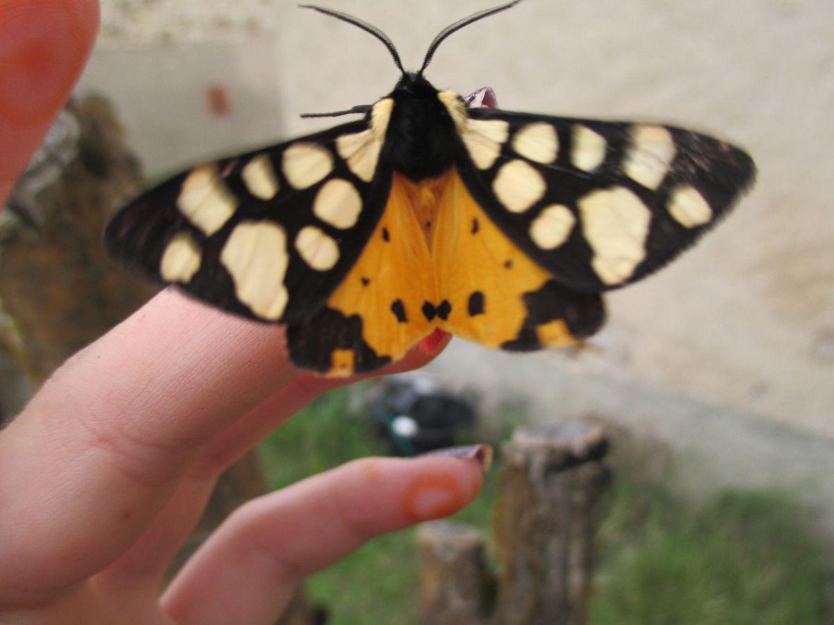 un magnifique papillon