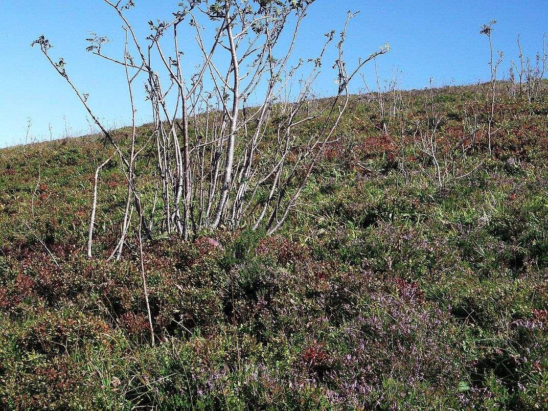 La recolonisation forestière des chaumes délaissées s'effectue en une petite dizaine d'années.
