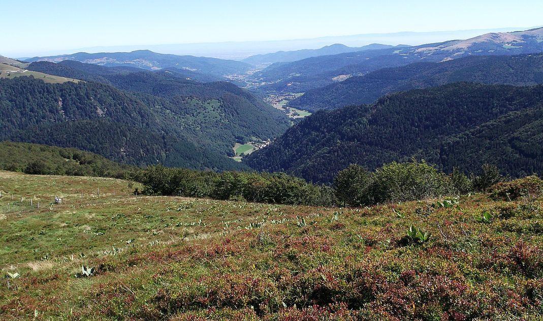 … et le panorama vers le haut de la vallée de Munster, Mittlach puis Metzeral.