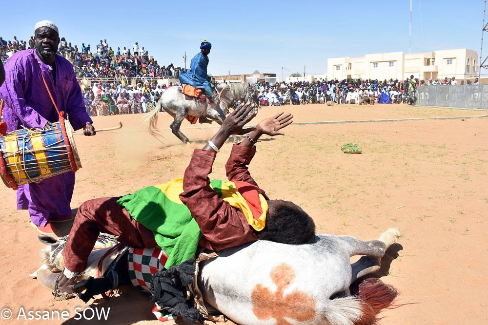 La commune de Diawara (département de Bakel, région de Tambacounda) a vécu, du 20 au 22 janvier, aux rythmes du Festival Ondes d'intégration. La 9ème édition qui avait pour thème « Culture et développement » a vu la participation des pays comme la Mauritanie (invitée d'honneur), le Mali, la Gambie, aux côtés du Sénégal. Occasion de sublimer une diversité culturelle qui s'est exprimée lors de la cérémonie officielle d'ouverture du festival. Devant les officiels, un public sous le charme, une parade équestre a mis au goût du jour la belle complicité entre l'homme et le cheval, obéissant au doigt et à l'œil du maitre. La chorégraphie, empreinte d'élégance et d'envergure a fini de conquérir une assistance qui en redemandait.