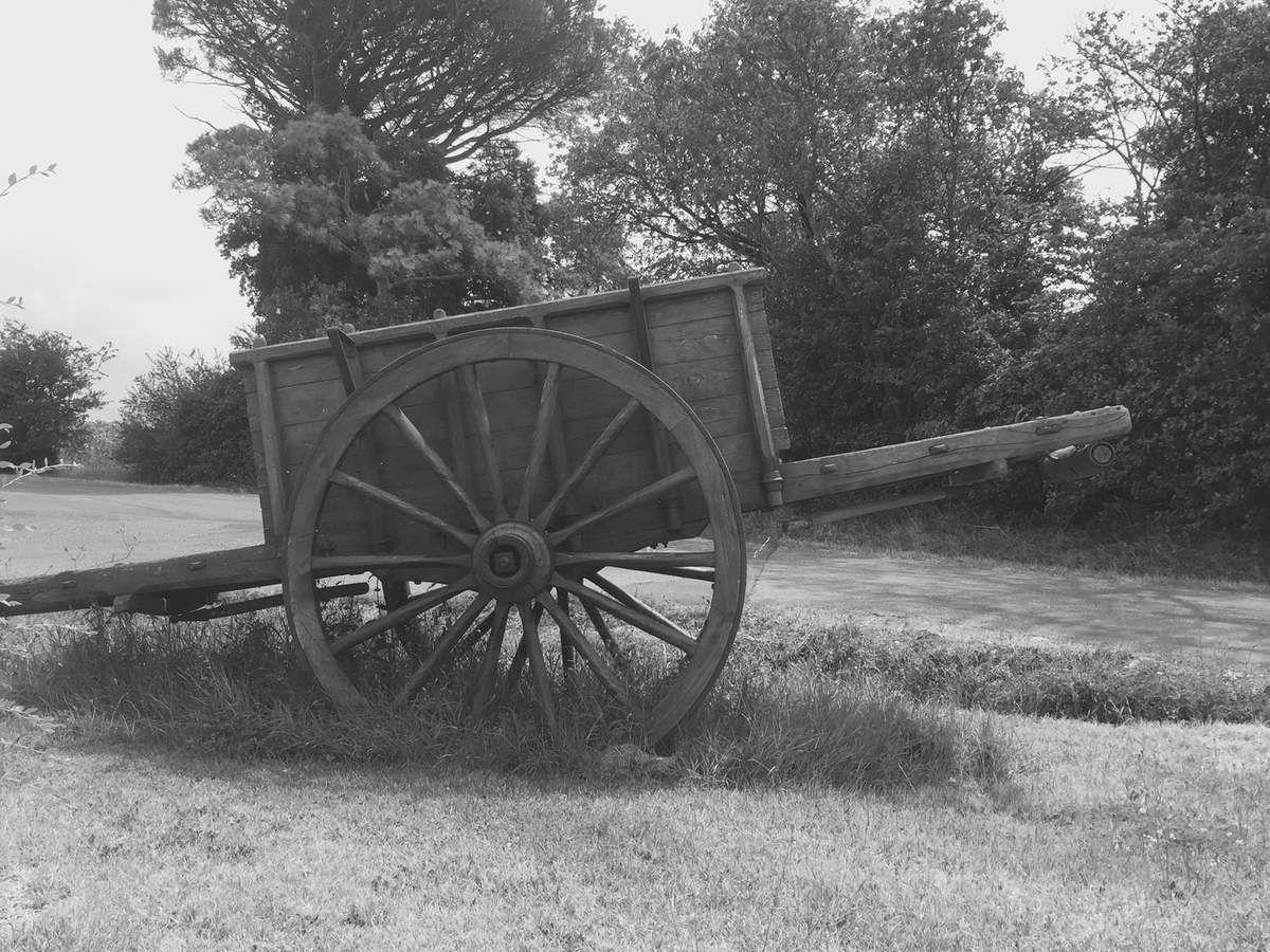 Vendredi 17 août 1956 : charger et décharger le fourrage