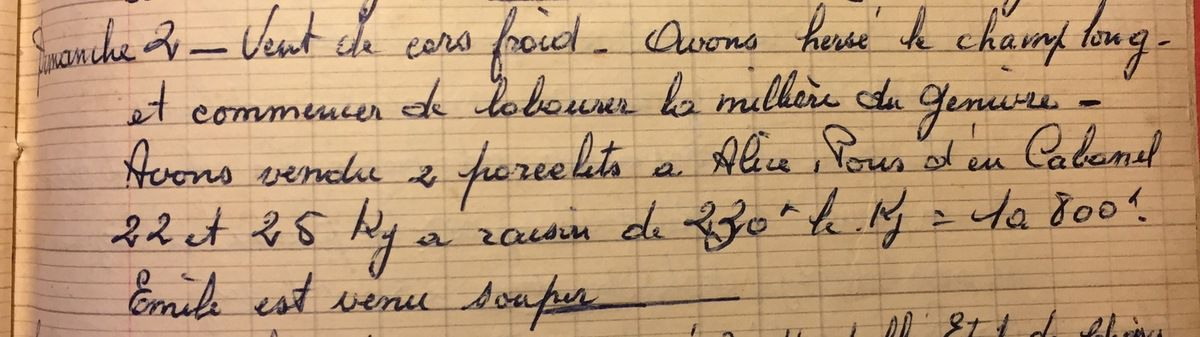 Dimanche 2 décembre 1956 - vendre des porcelets