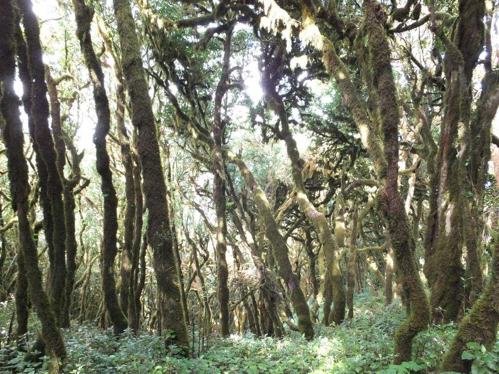 A travers les bois