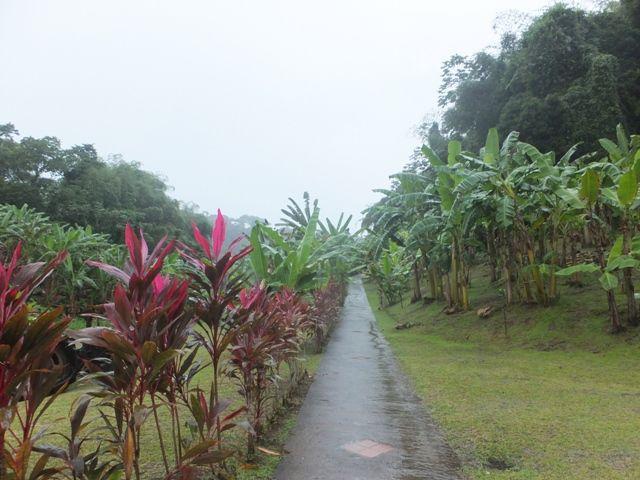 visite de la Bananeraie après la pluie