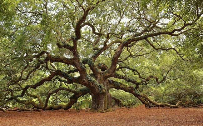 LIEU MYSTIQUE : Angel Oak - Virginie