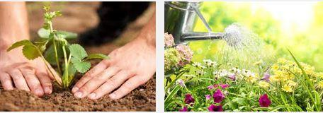 cultiver un verger en potssur votre balcon