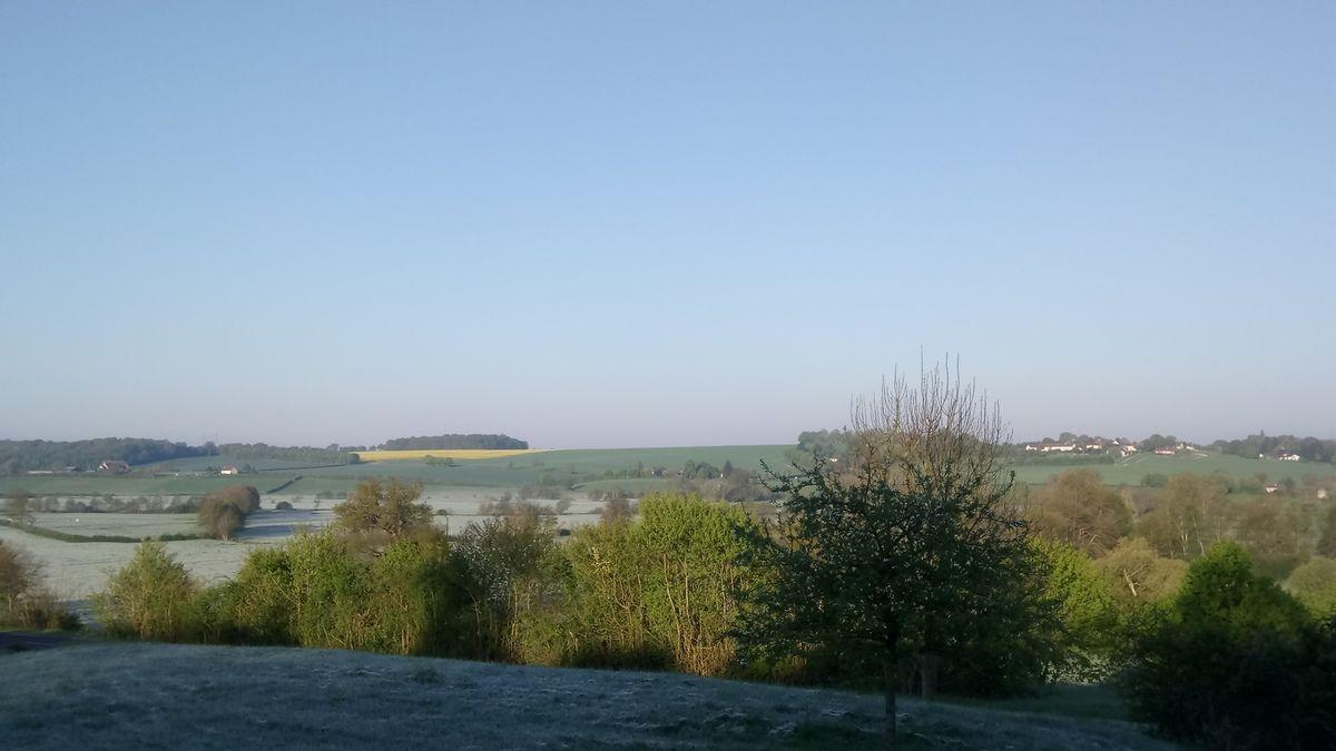 La gelée blanche de ce matin, l'herbe à perruches qui réapparaît, et la petite orchis elle aussi revenue.