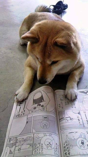 Image non issue de l'anime