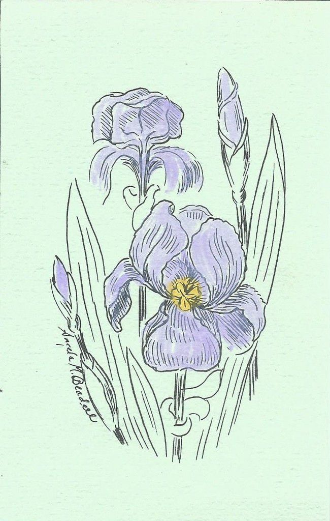 140 - IRIS - designed by ANGELA MASON BEADELL (hand colored)