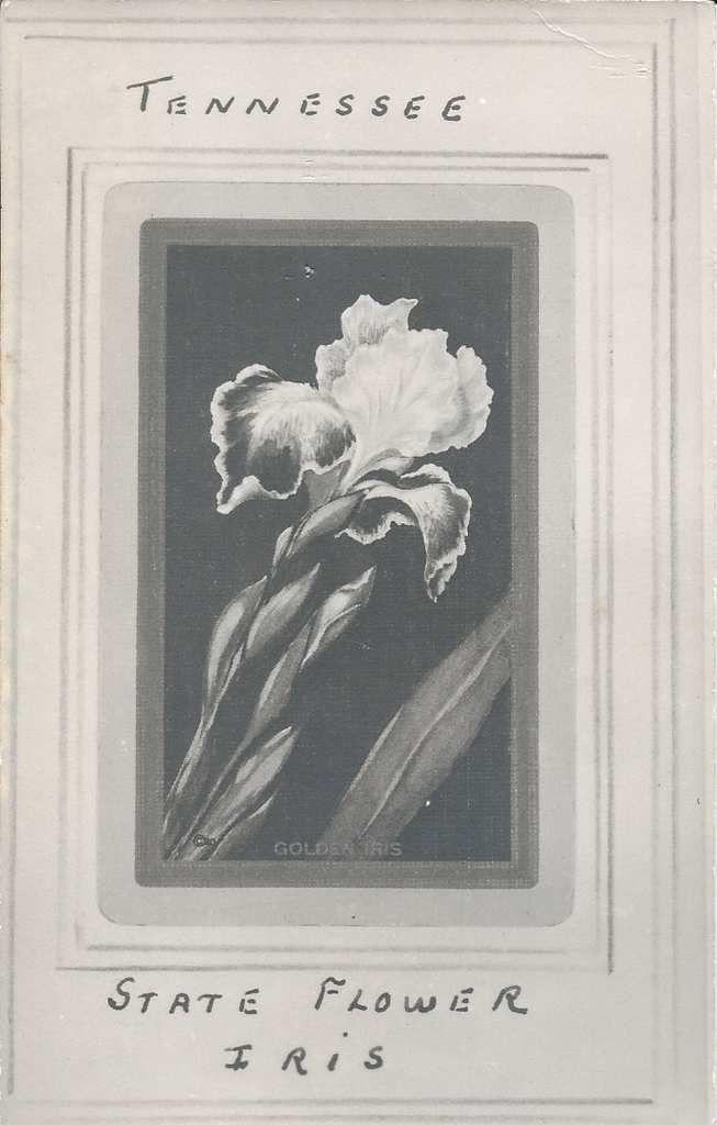 199 - EMBLEME DU TENESSEE