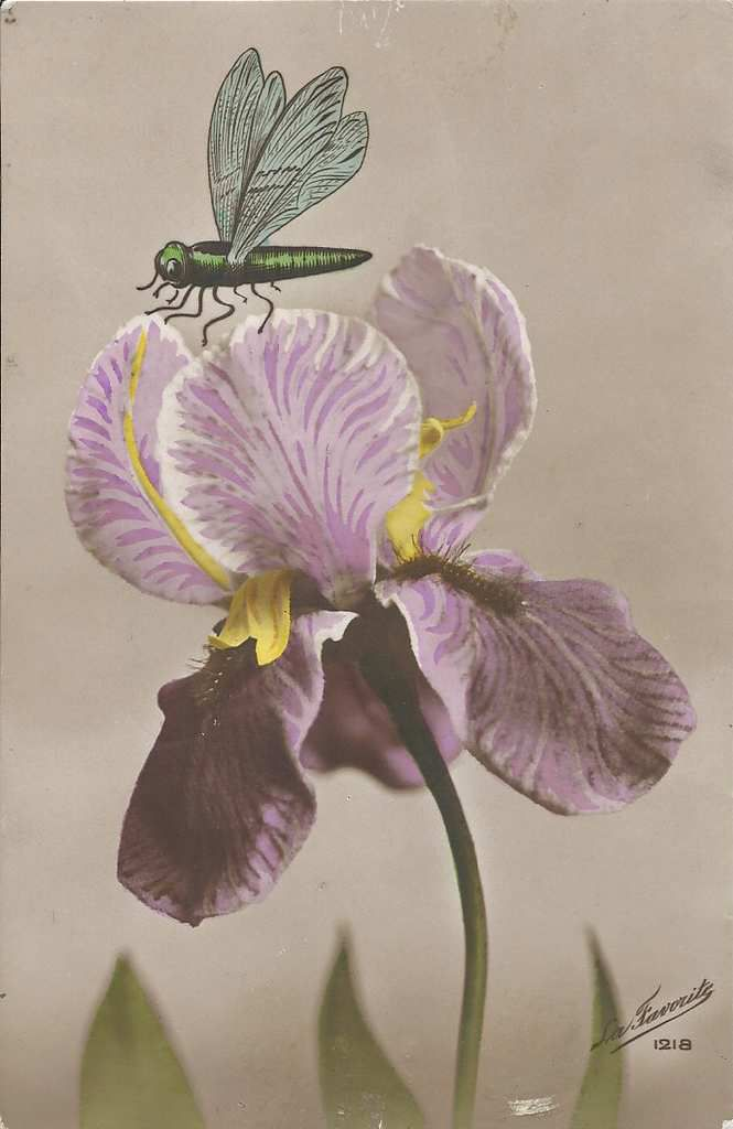247 - iris et libellule