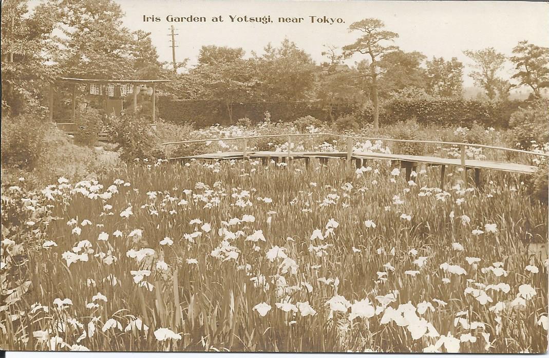 371 - IRIS GARDEN AT YOTSUGI,near Tokyo - (sépia)