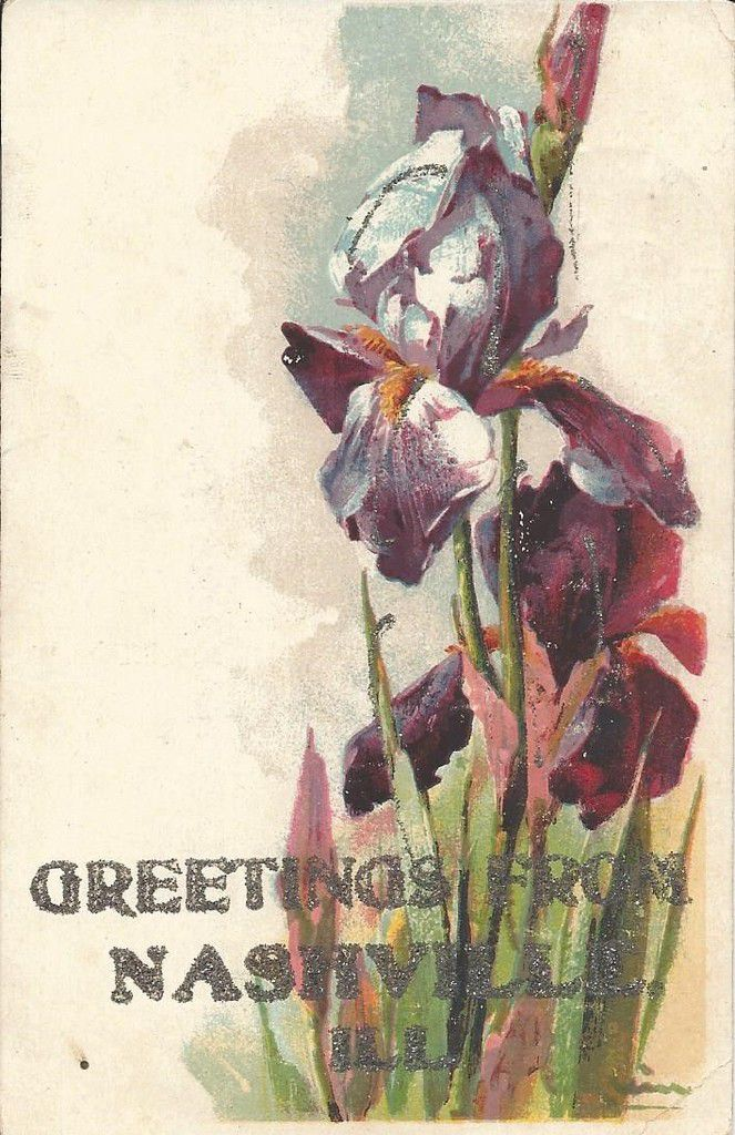 565 - GREETINGS FROM NASHVILLE -ILL. -  PAILLETTES - 2.nov.1907