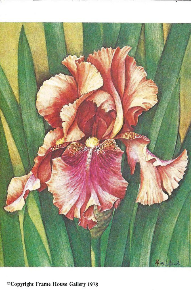 740 - GERMAN IRIS (autumn leaves) from MANABU SAITO peintre Coréen  - publiée par Frame House Gallery  , Louisville Kentucky