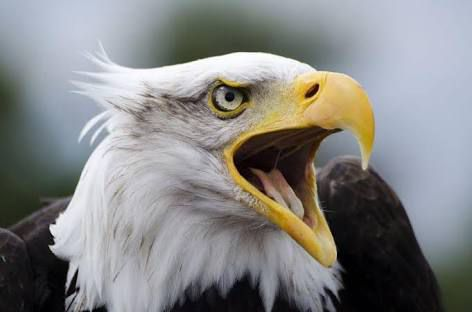 SEVEN LEADERSHIP PRINCIPLES TO LEARN FROM AN EAGLE - Music.Me