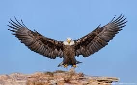 SEVEN LEADERSHIP PRINCIPLES TO LEARN FROM AN EAGLE
