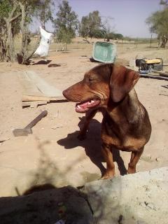 Taïka aide aux travaux