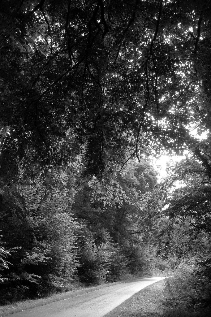 Se glisser entre les forêts lumineuses