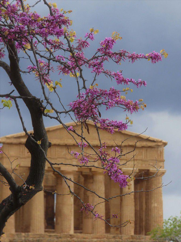 Sicile : la Vallée des Temples à Agrigente