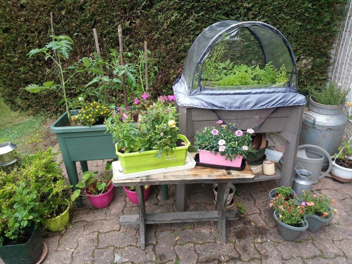 Bac A Plantes Aromatiques intérieur mon jardin de plantes et herbes aromatiques - les jolies choses de