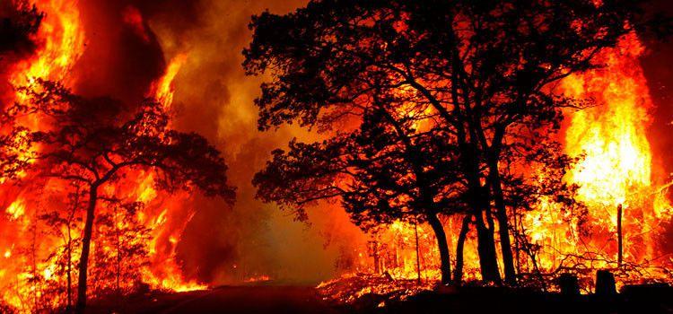 Entra en vigor la nueva Ley de Montes que permite construir en terrenos quemados