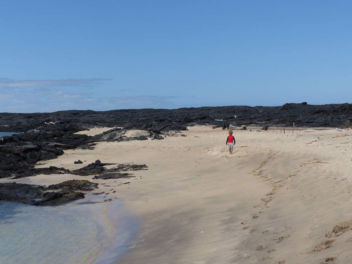 Iles Galapagos: Santa Cruz, premier contact...