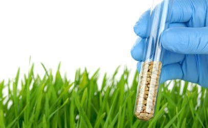 Mutagénèse, un tube à essai contenant des semences et la plante obtenue