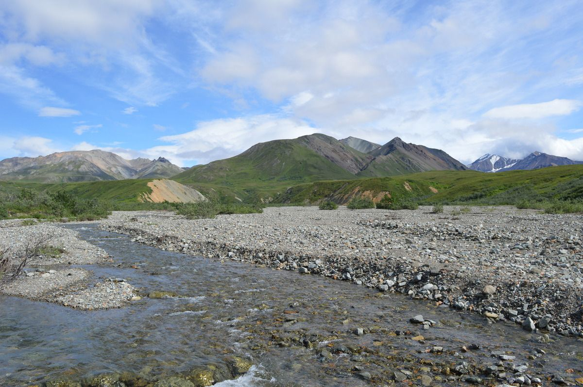 Denali National Park (jour 2)