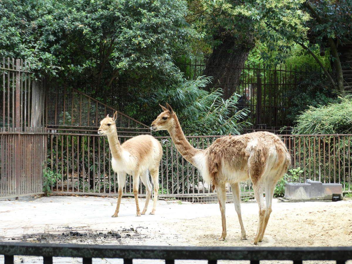 Paris la m nagerie zoo du jardin des plantes bernard k project - Zoo du jardin des plantes tarifs ...
