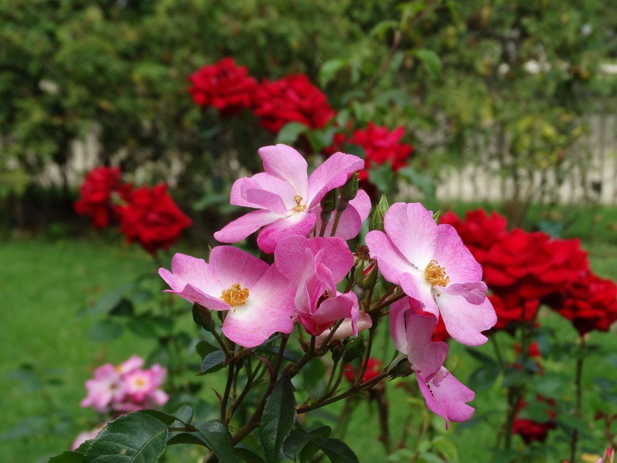 Paris – Des fleurs du Jardin des Plantes