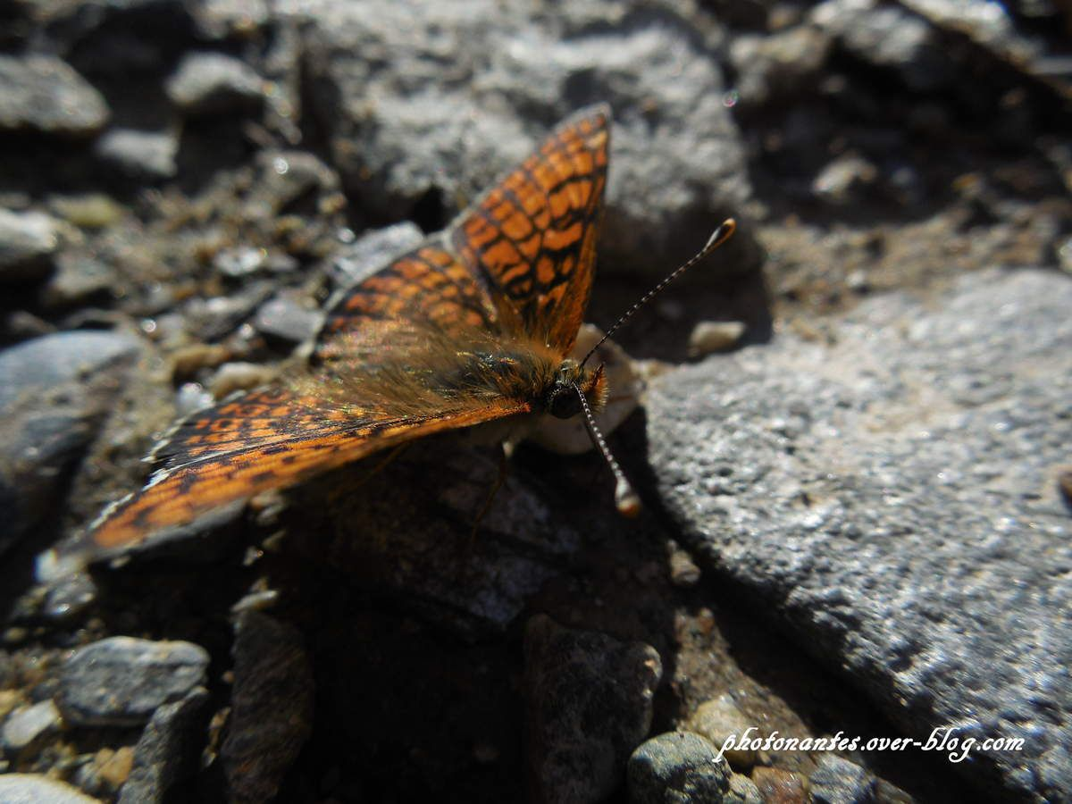 Papillons et autres bêtes