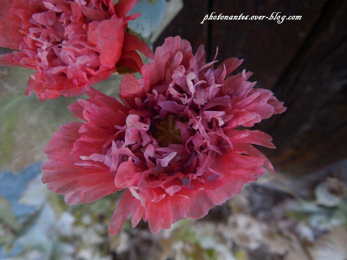 Fleur , Sentier de Planay