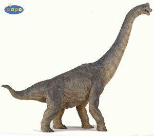 voici un brontausaure et un diplodocus adulte de 12 mètres