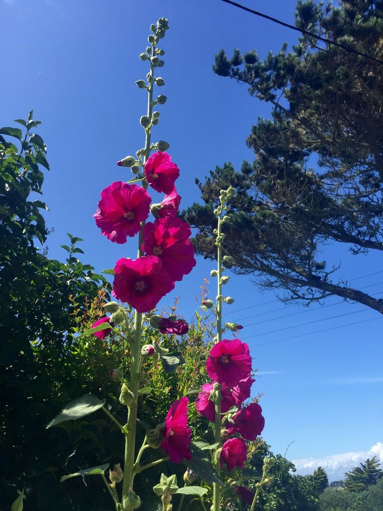 Couleurs du jardin diaporama