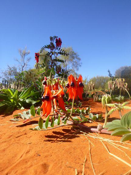 Alice Springs desert center