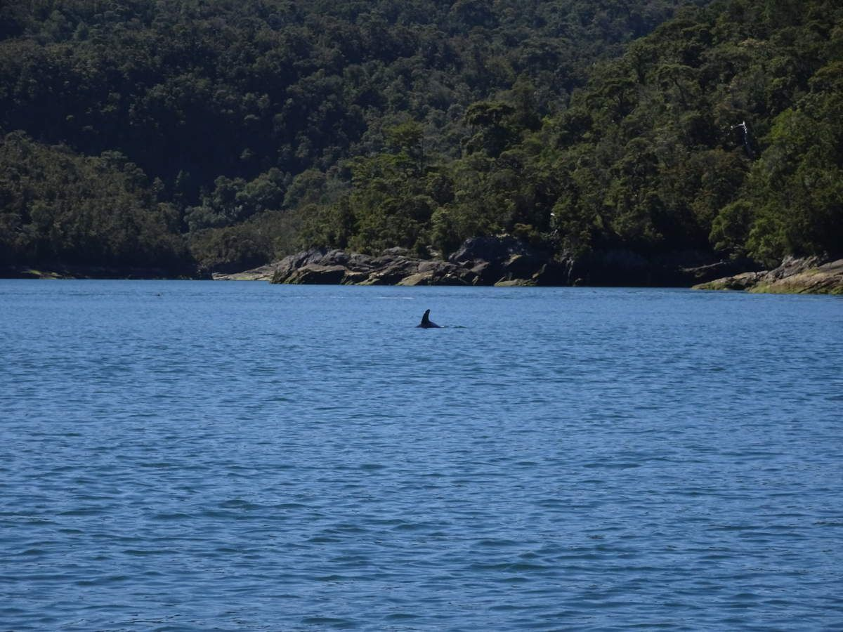 Sans oublier le dauphin :)