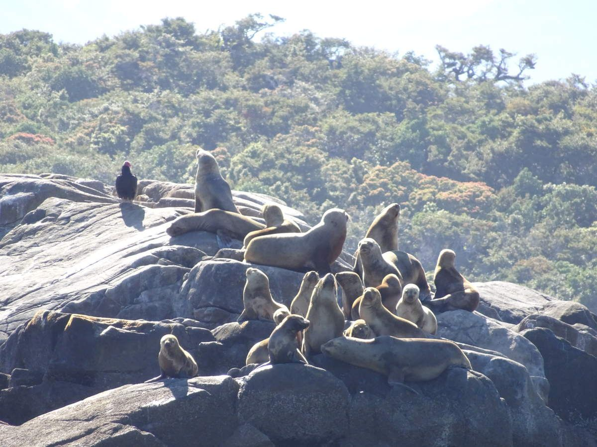 La faune très variée que nous avons pu admirer :)