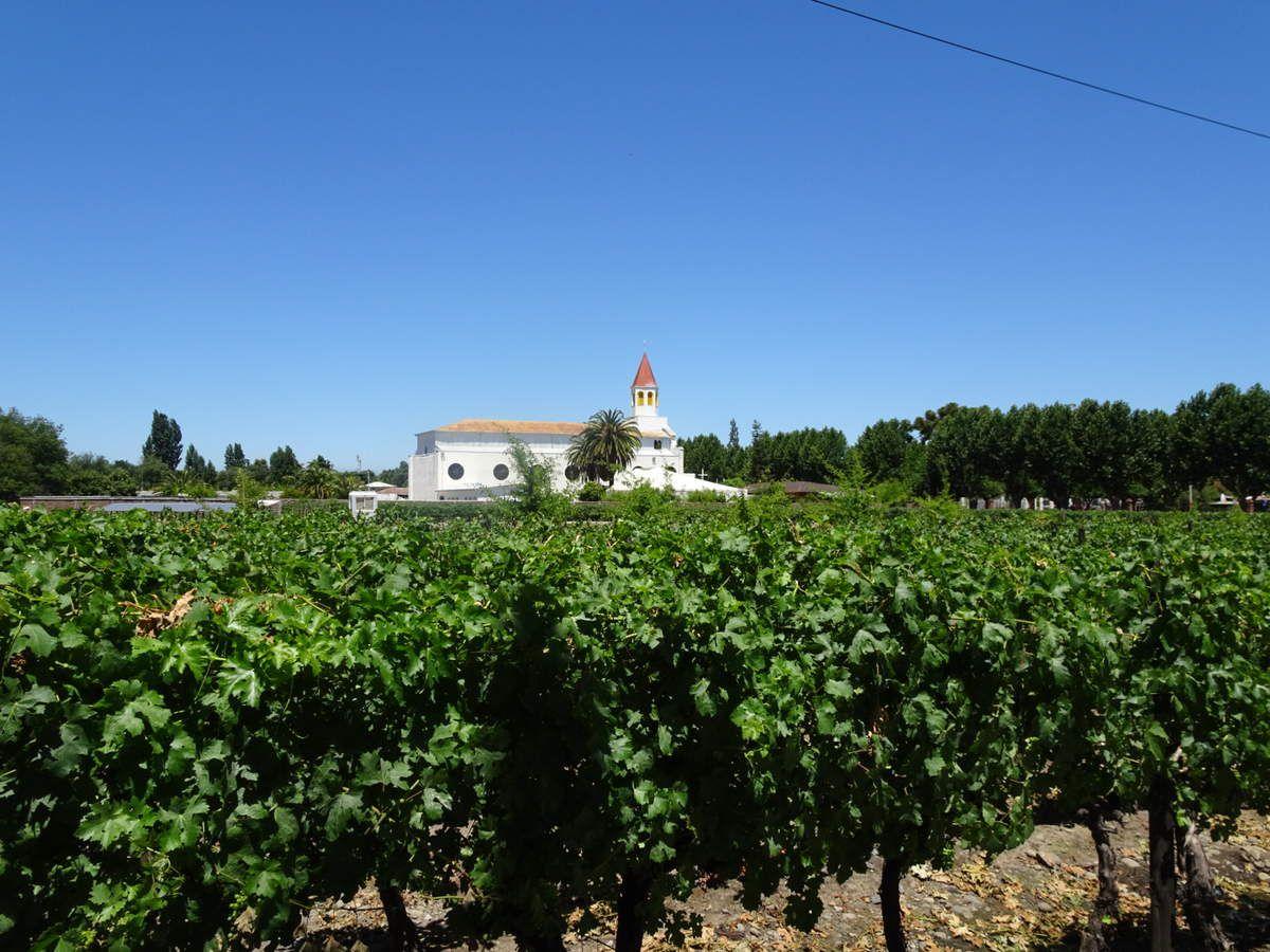 L'entrée du vignoble Balduzzi avec ses vignes devant et derrière