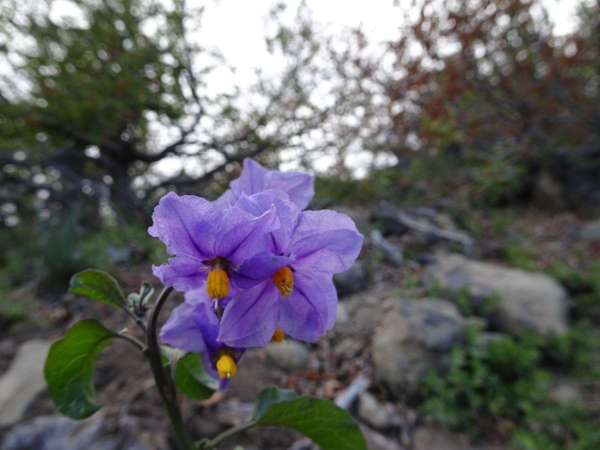 Dans ce parc peu fréquenté, la flore est pleine de couleurs !